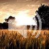 Bhagavad Gita 8.18-19, part 2