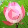 2. Meditation with breathing (VIDEO)