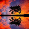 3. Perverted reflection