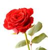 7. SPIRITUAL RELATIONSHIP